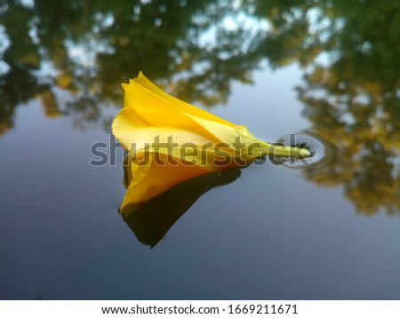 Flower in water Flower is such a beautiful in this earth.When it's flowed in water it's look very beautiful. Flower is the most beautiful things in the world.