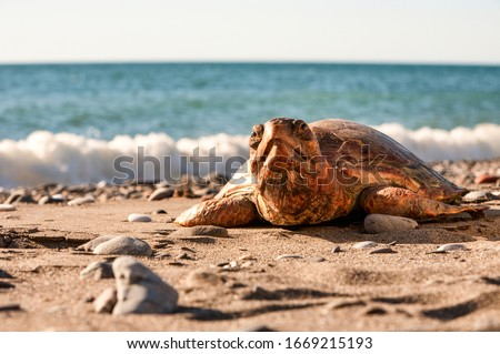 reptiles turtles are reptiles of the order characterized by a special bony or cartilaginous shell developed from their ribs that acts as a shield reptiles animal water summer nature reptile life turtl #1669215193