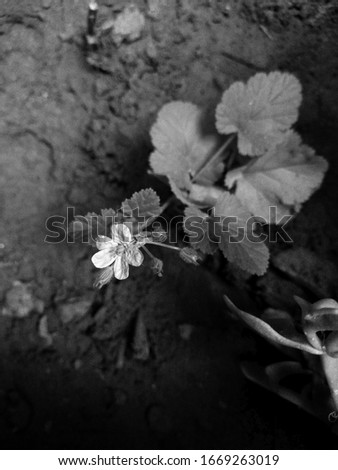 black picture of a flower in the dirt