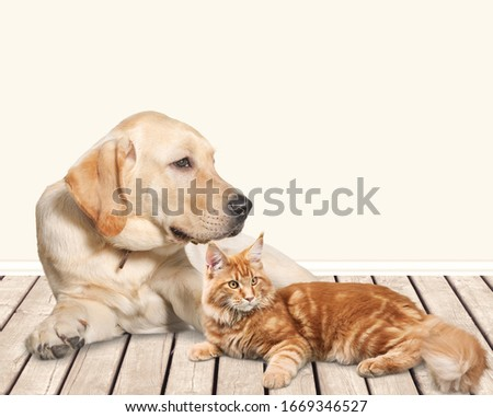 Beautiful cat and cute dog on the floor #1669346527