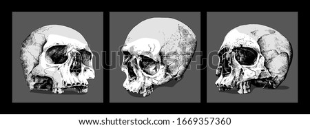 Three Skulls without lower jaw. Set collection. Hand drawn style print. Vector illustration.