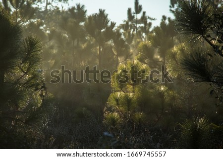 in the moring with Beautiful pine tree at phu kra dueng National Parks , Loei Province, Thailand #1669745557
