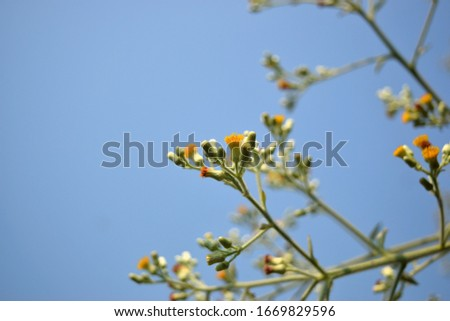 this pic show bouquet of weed flower with blue sky background