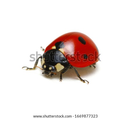 Ladybug isolated on white background Royalty-Free Stock Photo #1669877323