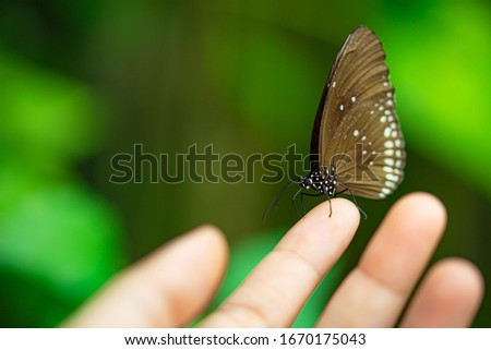 Butterfly on hand of people in garden with blurred background. Soft picture