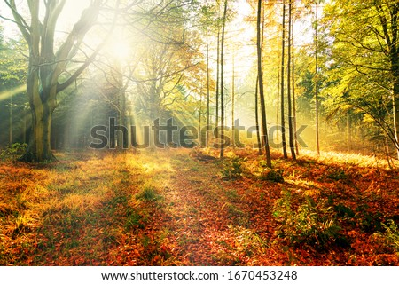 Colourful autumn forest trees in the sun Royalty-Free Stock Photo #1670453248