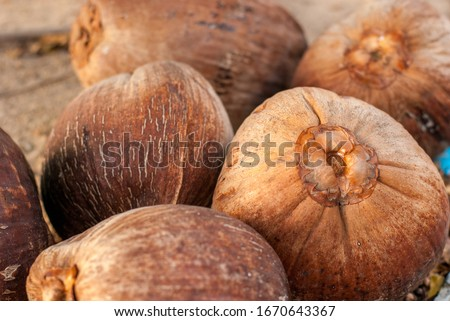 The amount of brown coconut turns in the evening #1670643367