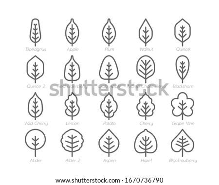 Spring Leaf Outline line Icon Set Spring Concept Minimal Style Illustration Vector EPS 10. #1670736790