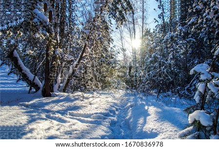 Winter snow forest sunset lights. Snowy winter forest sunset. Sunset in winter snow forest. WInter sunset forest snow #1670836978