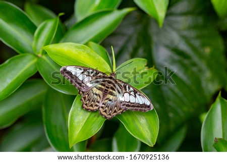 Butterfly sits on green leaf in forest. natural picture, Selective focus