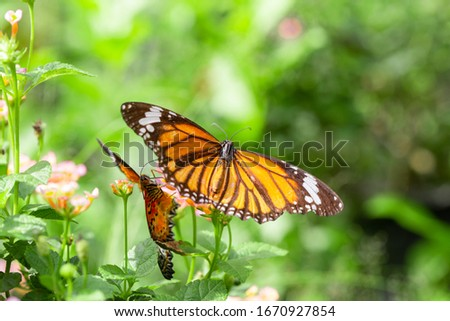 Two butterfly on flower in garden with blurred background and copy space. natural image, Selective focus. soft picture
