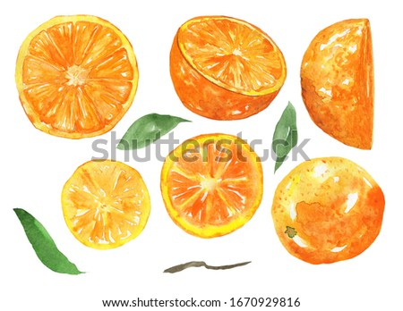Set of sliced orange fruits with green leaves isolated on white background. Watercolor hand drawing illustration of half tropical fruit. Perfect for logo, label, food design, menu, covers, print. #1670929816