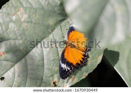 Butterfly on leaf in forest with copy space and vintage tone. natural image, Selective focus. soft picture