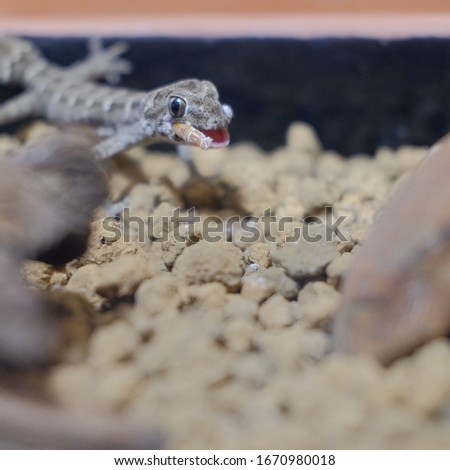 Pictures of reptiles kept with pets