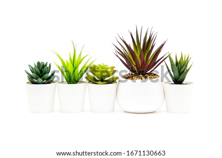 Indoor small green plant isolated on white #1671130663