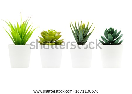 Indoor small green plant isolated on white Royalty-Free Stock Photo #1671130678