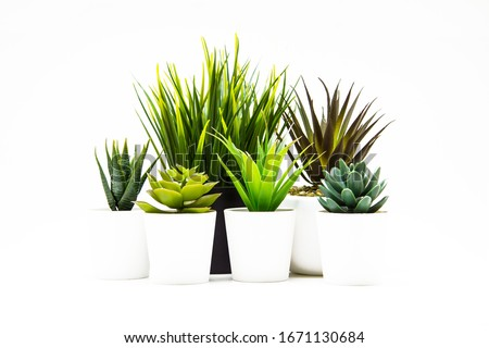 Indoor small green plant isolated on white #1671130684