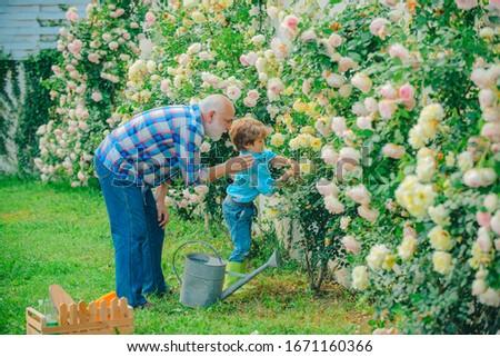 Gardening - Grandfather gardener in sunny garden planting roses. Gardener in the garden. Little helper in garden. Hobbies and leisure. Flower ground #1671160366