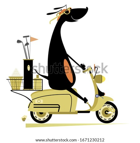 Smiling dog rides a scooter and goes to play golf isolated illustration. Smiling dachshund on the scooter is on the way to the golf course isolated on white illustration