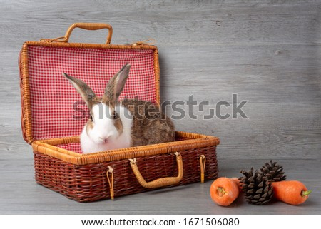 Happy Easter Day. The brown rabbit in the basket Cute Easter bunny rabbit with painted Easter eggs on wood background. Fancy rabbit in a weave basket. hare and cony in weave bag. #1671506080