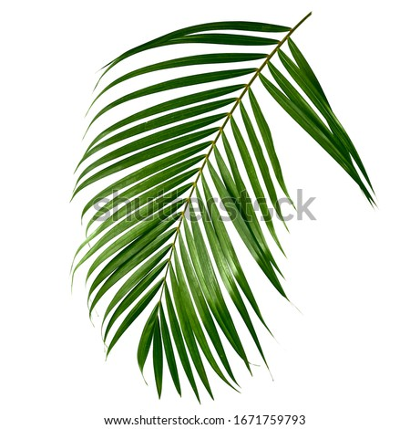 Tropical green palm leave , jungle leave floral pattern isolated on white background Copy space for text or design #1671759793