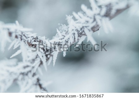 A thin branch of a Bush in the forest is covered with frost in the frosty winter. #1671835867
