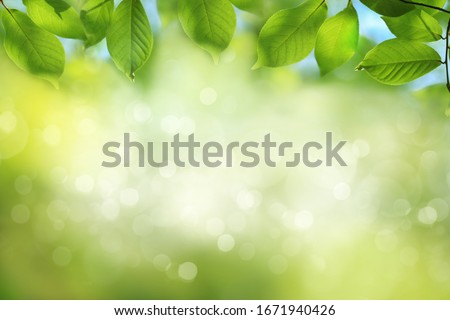 Blurred spring nature background with green tree leaves #1671940426