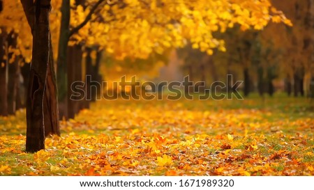 Autumn forest. Fallen leaves on the ground. Yellow autumn forest.