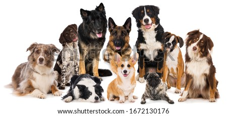 Group of purebred dogs isolated on white background #1672130176