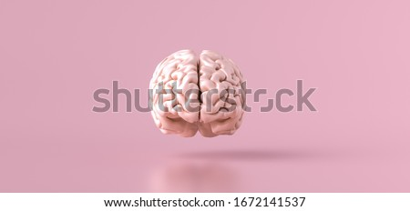 Human brain Anatomical Model, front view #1672141537