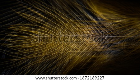 Extreme close up of bird feathers looks like work of art, background wallpaper
