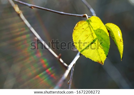green autumn leaves on a branch with sun rays #1672208272