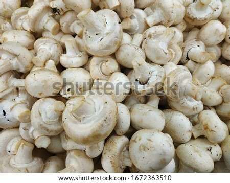 Background of fresh whole mushrooms, closeup. Champignon mushrooms. #1672363510