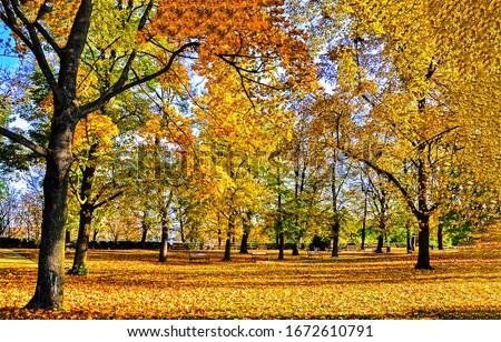 Autumn city park scene. City park in autumn. Golden autumn city park. Autumn park view #1672610791