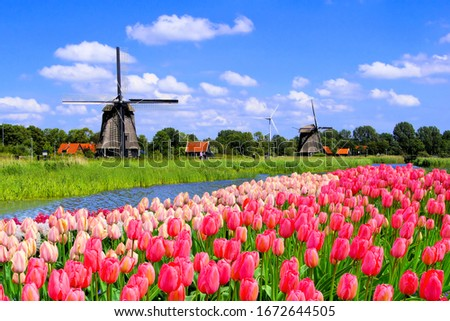 Traditional Dutch windmills along a canal with pink tulip flowers in the foreground, Netherlands #1672644505