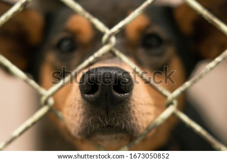 Puppies in shelter waiting for adoption Royalty-Free Stock Photo #1673050852