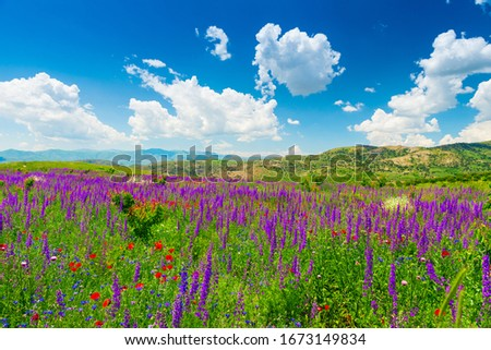 sunny summer day landscape, mountains of Armenia covered with beautiful wildflowers #1673149834