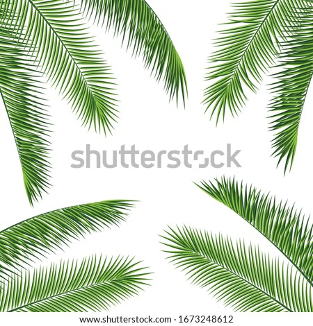 Fropical palm leaves frame botanical vector illustration. Exotic nature card or banner with frame for text isolated on white background. Jungle green leaf floral pattern. Tropical palm leaves card. #1673248612