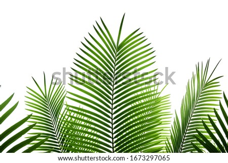 Palm leaves isolated on white background for decor your project. #1673297065