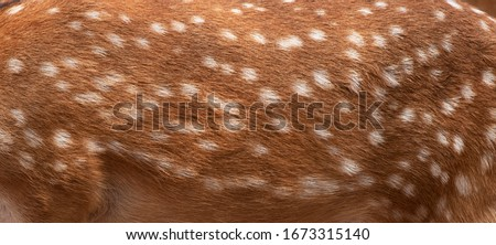 Deer skin pattern white spot in picture.