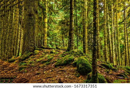 Mossy forest trees scene. Forest trees view. Mossy forest scene. Forest trees background #1673317351