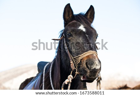 A picture of a horse taken at the horse farm in Montenegro