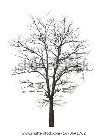 isolated death tree on white background with clipping path Royalty-Free Stock Photo #1673641762
