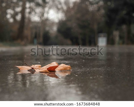 Autumn leaf in the rain on the road outside, outdoors near a park forest trees. Moody, gray picture