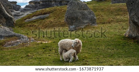 Sheep suckling her daughter in the beautiful green field of Elephant Rocks on a sunny day, New Zealand #1673871937