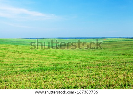 Green grass under blue sky #167389736