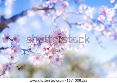 Spring blossom background. Beautiful nature scene with blooming tree on sunny day. Spring flowers. Beautiful orchard in Springtime. Abstract background Royalty-Free Stock Photo #1674008155