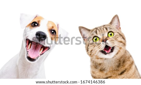 Portrait of  funny dog Jack Russell Terrier and cheerful cat Scottish Straight isolated on white backgroun #1674146386