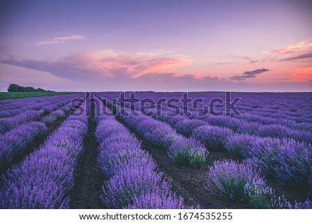 lavender purple clounds picture landscape
