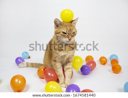Red cat is looking at the camera. Pictures of cats, cat eyes, cute cat, drawings of cats, drawings of cats. Russian cat with a hat on a white background. Balls. Isolate Copyspace. #1674581440